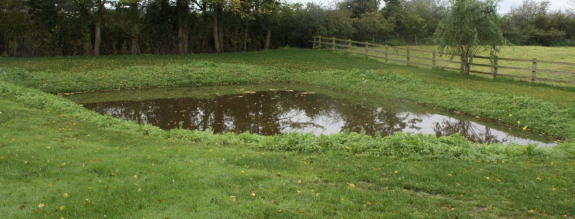 Small pond next to fenced woodland