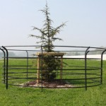 Large Tree Guard