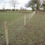 Stock Netting for Pigs