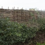 Wattle Hurdles Fencing Cheshire