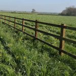 Wooden post and rail fencing in grass field