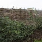 Wooden wattle hurdle garden fencing behind hedge