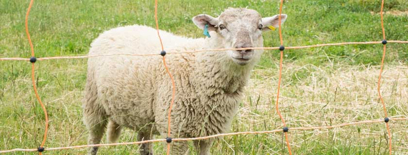 Electric Sheep Fencing Cheshire
