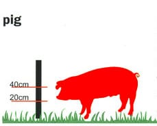 Pig fencing height diagram