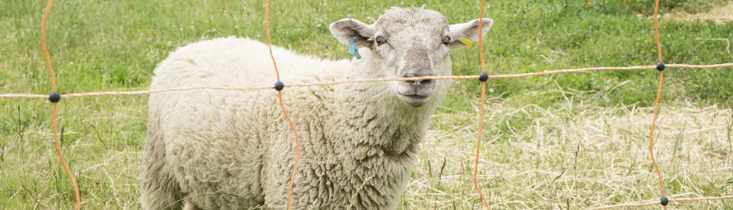 electric-sheep-fencing