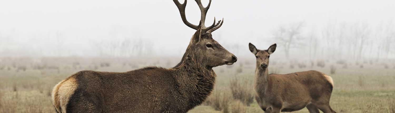 deer-fencing