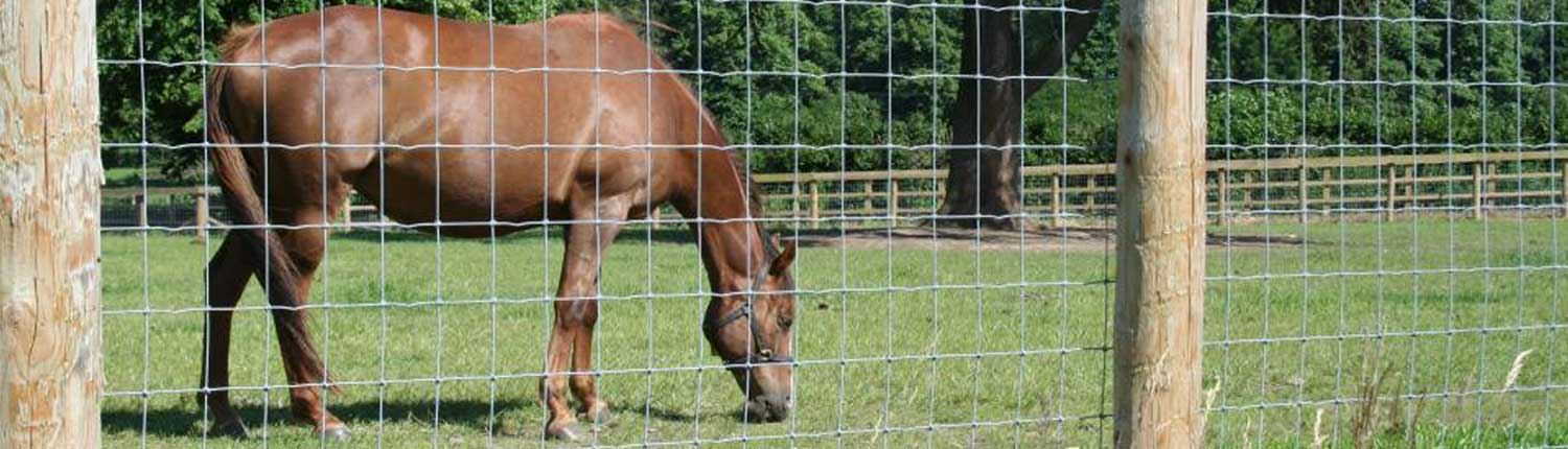 horse-fencing-protection