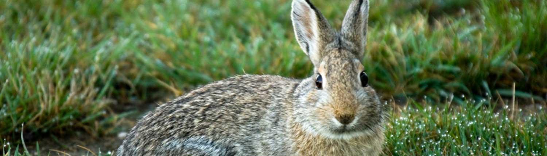rabbit-proof-fencing