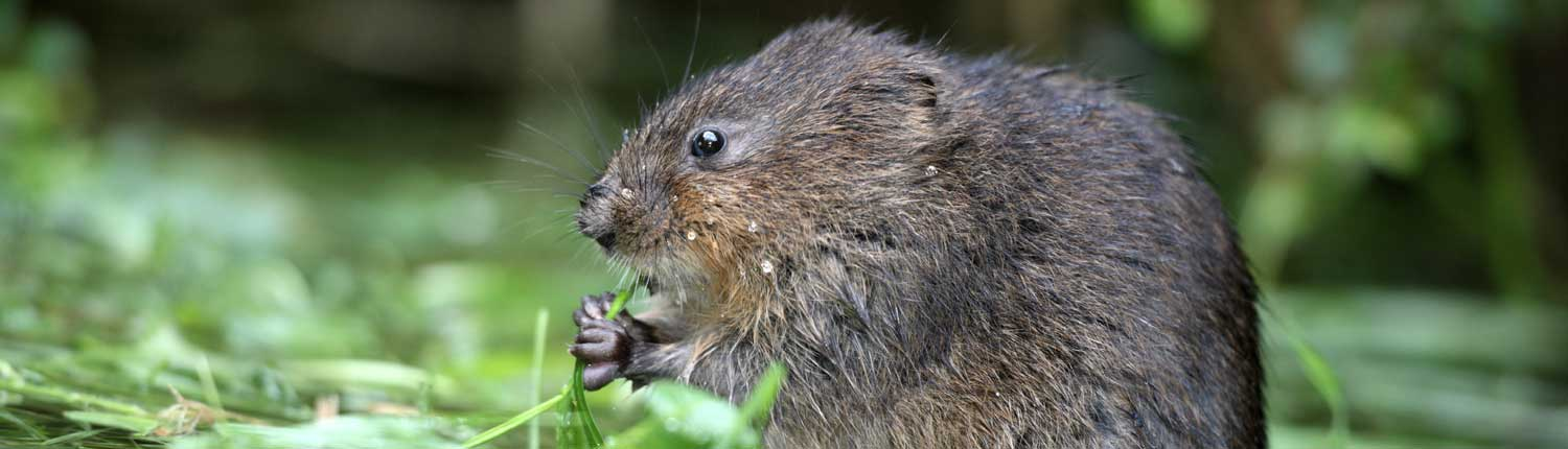 water-vole-protection-fencing